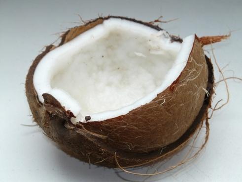coconut coconuts exotic