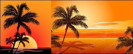 Coconut on sunrise
