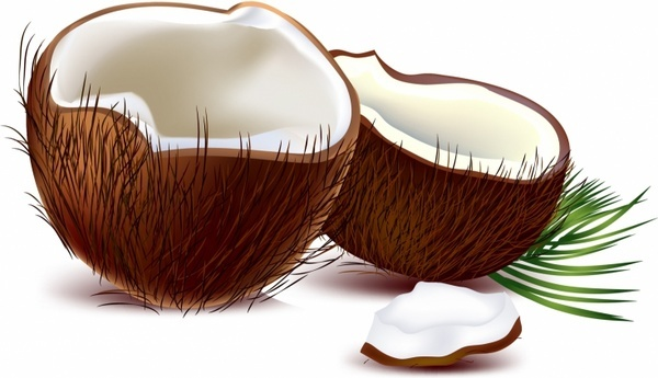coconut free vector download  332 free vector  for commercial use  format  ai  eps  cdr  svg