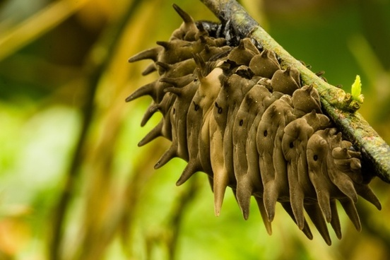 cocoon spikes insect