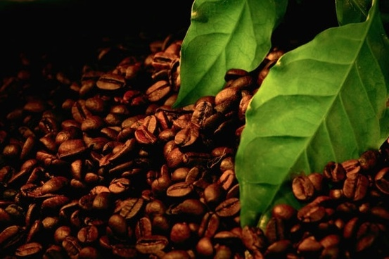 coffee beans poster 02 hd pictures