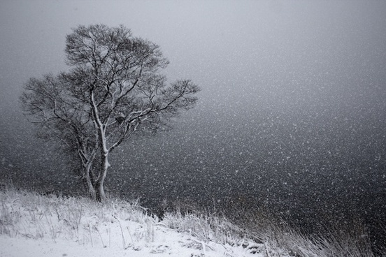 cold countryside fog foggy forest frost frozen ice