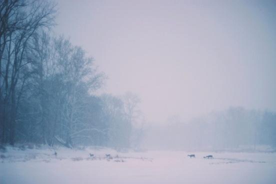 cold fog foggy frost frozen hokkaido ice landscape