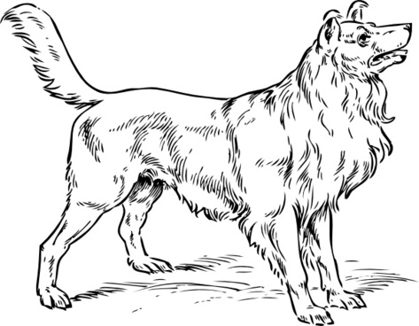 Collie Dog clip art