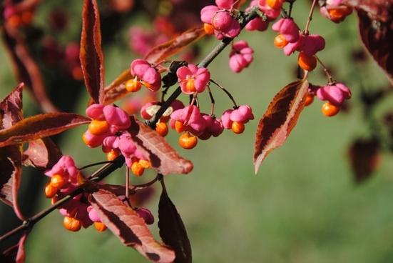 color autumn nature