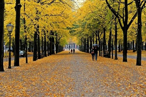 color autumn tree nature