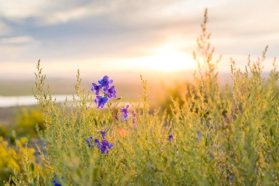 color country countryside field flower grass