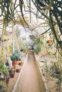 color design flower garden greenhouse growth