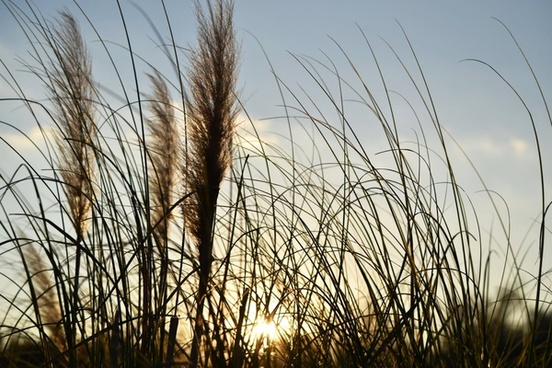 color dry environment gold golden grass landscape