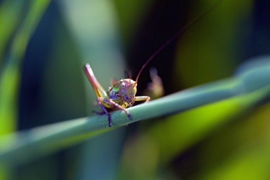 color macro grasshopper
