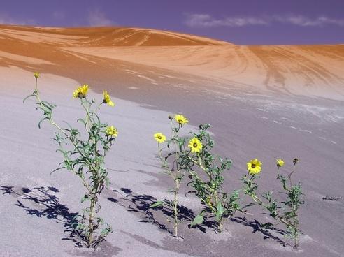 colorado sand dune dunes