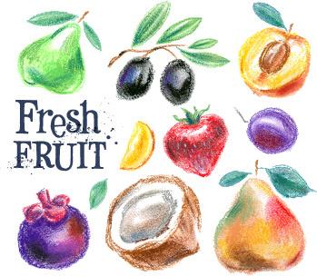 colored drawn fruits vectors