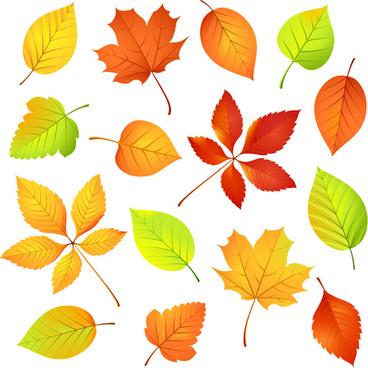 colored leaf vector set