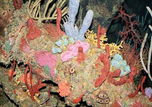 colorful corals