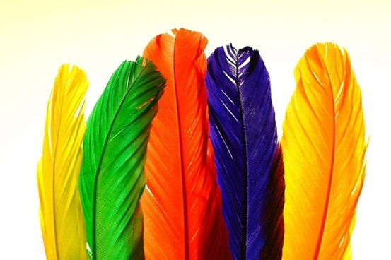 colorful feathers hd picture 1