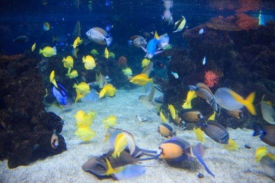 colorful fish underwater