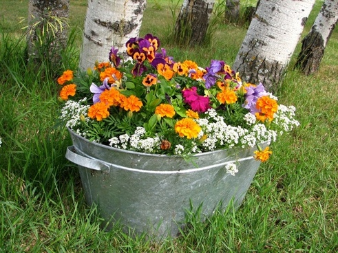 colorful flower bucket pot