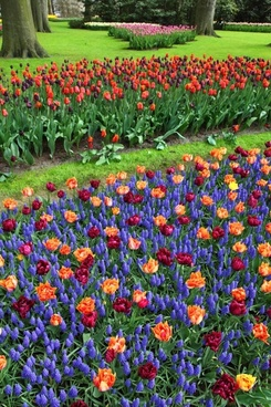 colorful flowers bloom