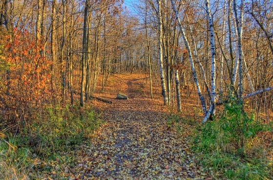 colorful hiking trail at kettle moraine north wisconsin