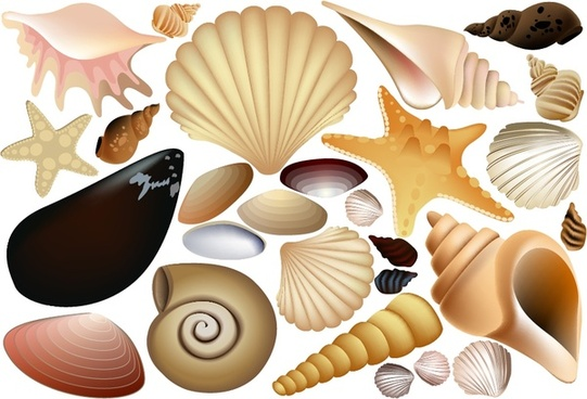 shells icons collection colored 3d design