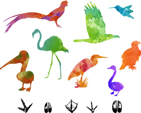 colorful silhouettes vector illustration of birds