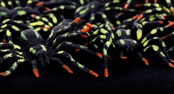 colorful spiders