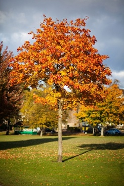 colorful tree in autumn