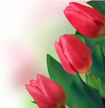 tulip background red blooming decor realistic design