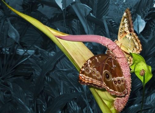 colorized butterflies