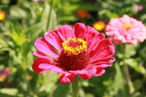 colors flowers garden