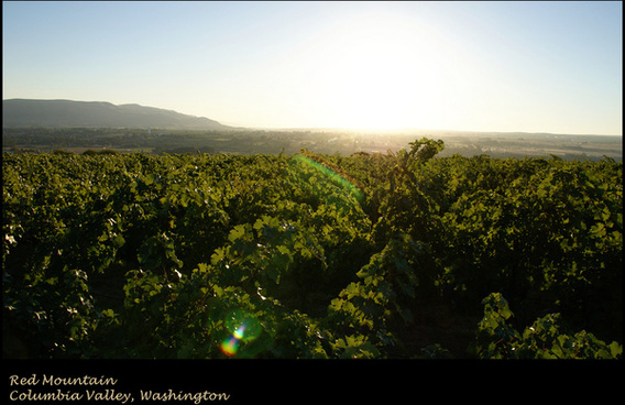 columbia valley vineyard
