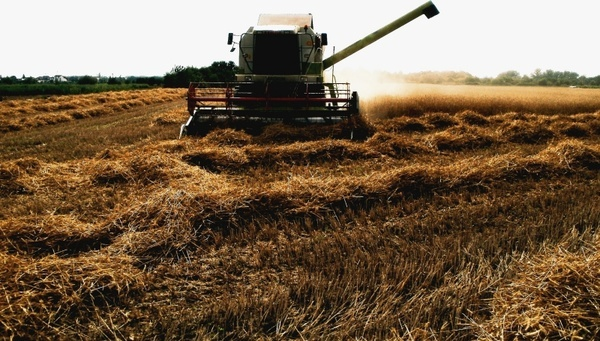 combine harvester harvesting