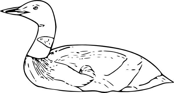 Common Loon clip art