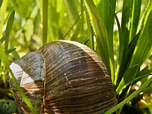 conch snail macro grass