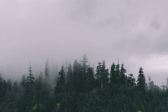 conifer evergreen fog foggy forest haze landscape