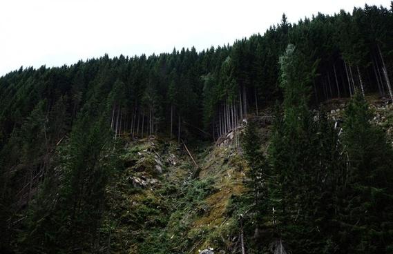 conifer fog forest hiking landscape mountain national
