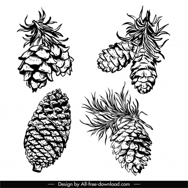 conifer pine cone icons black white handdrawn sketch