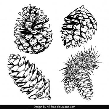 conifer pine cone icons black white retro handdrawn