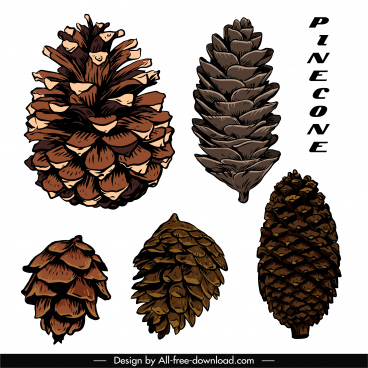 conifer pine cone icons classical handdrawn sketch