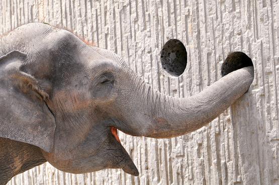 content elephant