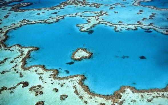 coral daytime exploration fish invertebrate island