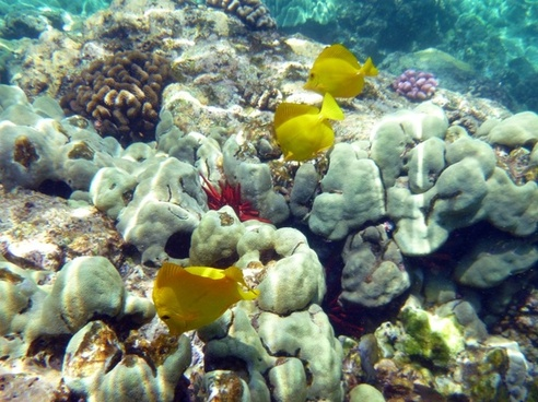 coral fish underwater