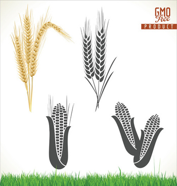 corn and wheat vector