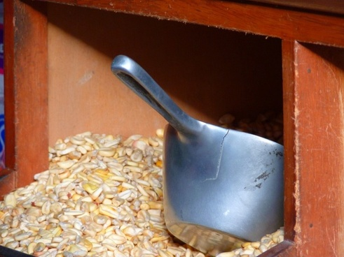 corn cereals food