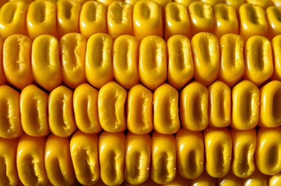 corn cereals yellow corn