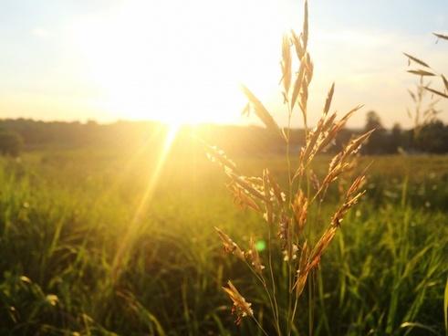 corn country countryside crop dawn field fog gold