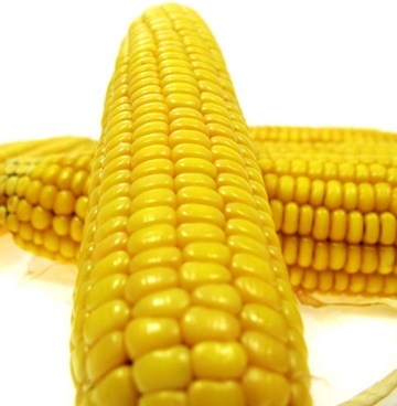 corn definition picture