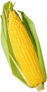 corn picture 01 hd pictures
