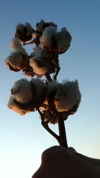 cotton hand sky