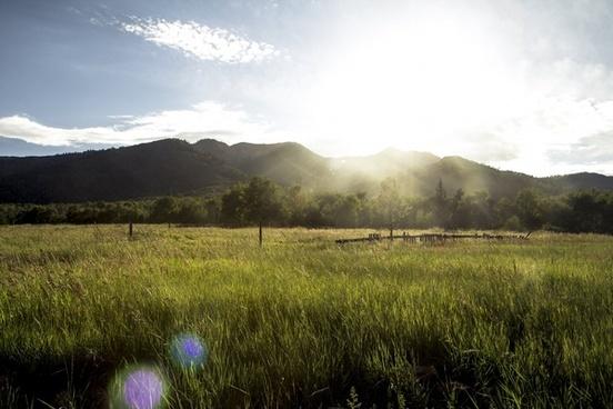 countryside dawn evening field fog forest grass